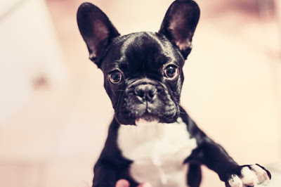 Celebrate National Dog Day: A Guide to Owning a Dog in Salt Lake City
